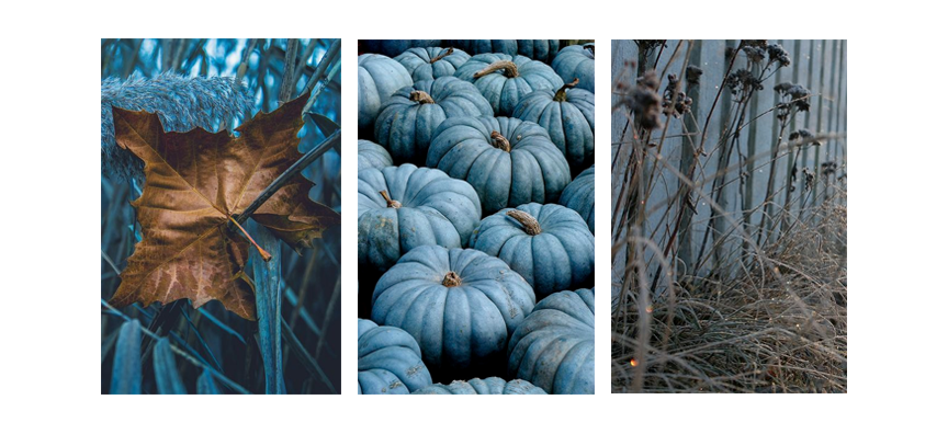 COTW---Fall-Blues