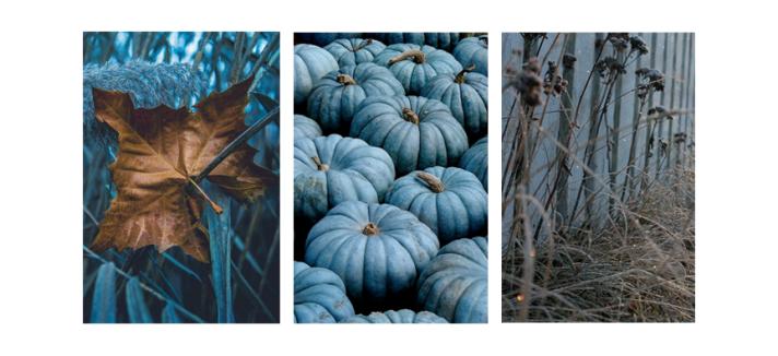 COTW---Fall-Blues